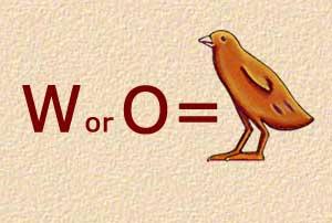 W - Quail Chick - Alphabet