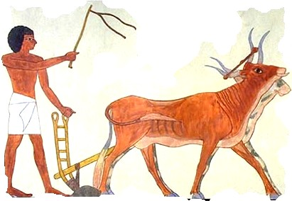 The Ox-drawn Plough